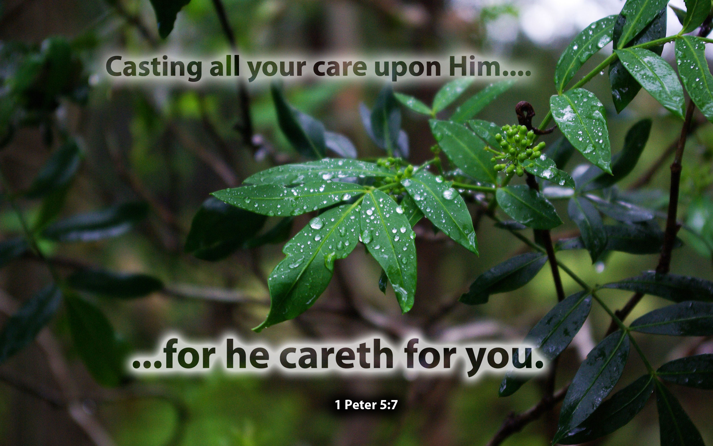 1  Peter 5:7 - Free Nature & Bible Desktop Background / Wallpaper