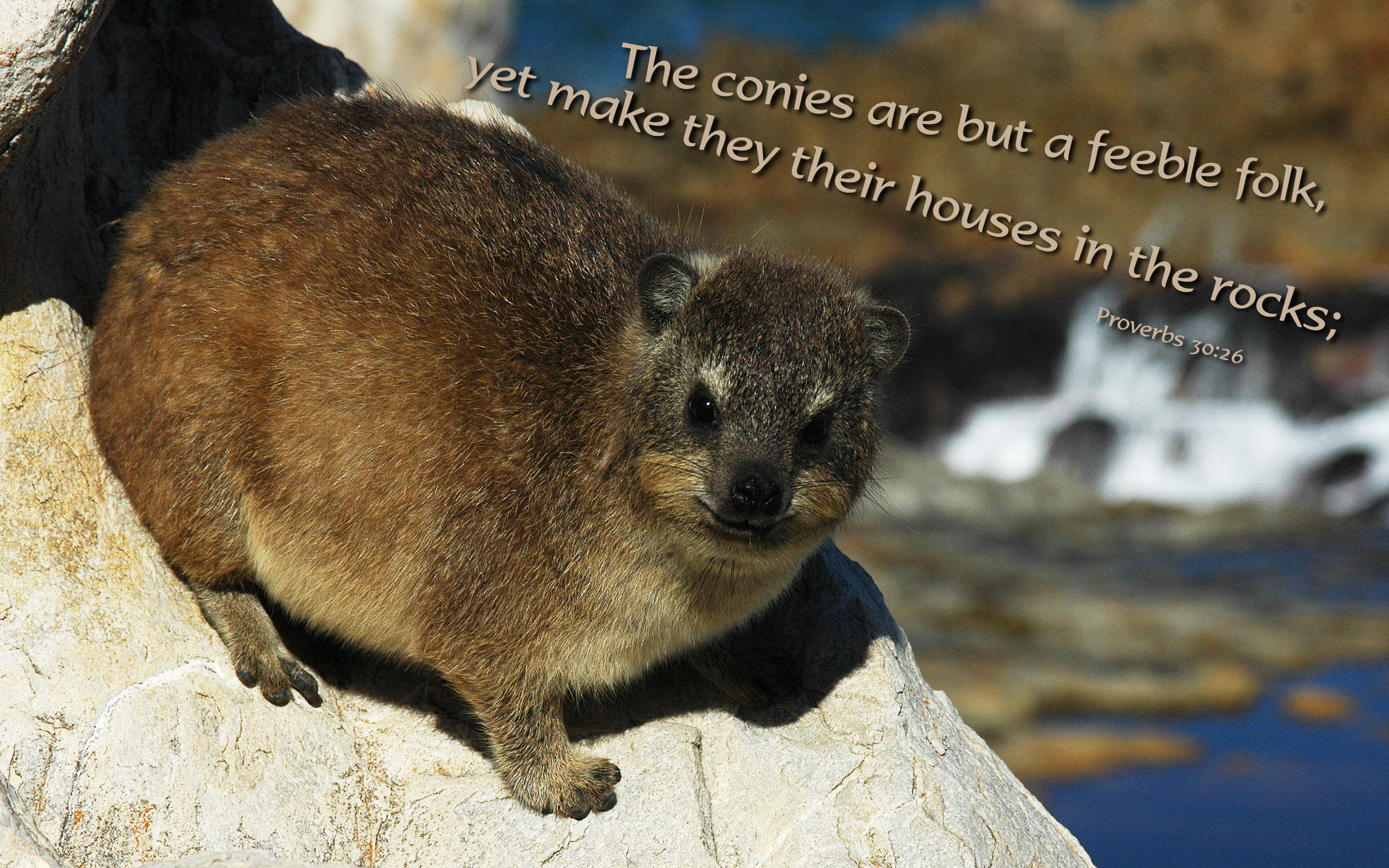 Proverbs 30:26 - Free Nature & Bible Desktop Background